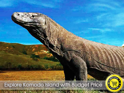 EXPLORE_KOMODO_ISLAND_-_3Days_2Nights_Trip